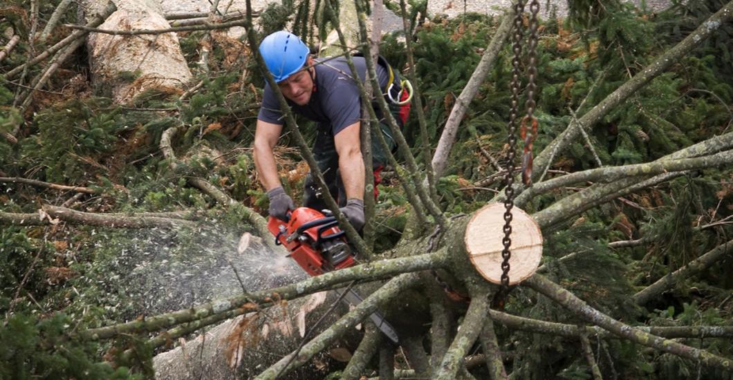Kletterausrüstung Baum Fällen : Baumfällerkurs in bischofsgrün bei bayreuth im fichtelgebirge
