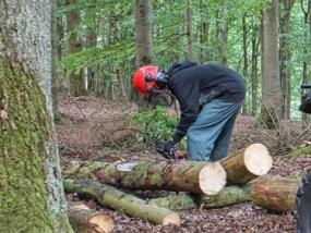 Baumfäller Wochenende in Herresbach, Rheinland-Pfalz - Erlebnis Geschenke