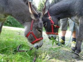 Esel Outdoor Tag in Clausthal-Zellerfeld, Niedersachsen - Erlebnis Geschenke
