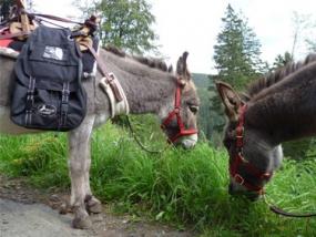 Esel-Trekking-Tour in Clausthal-Zellerfeld, Niedersachsen