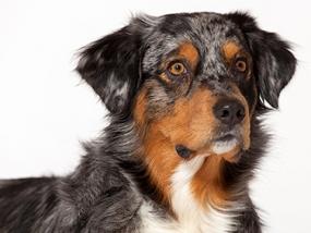 Hunde Fotoshooting Essen - Erlebnis Geschenke