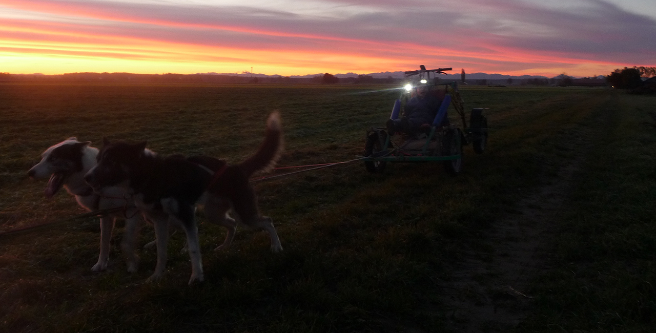Schlittenhunde-Fahrt