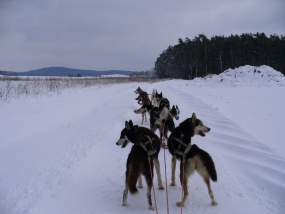 Husky-Race-Workshop in Stulln, Raum Regensburg in Bayern