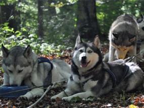 Husky Trekking Jagstzell