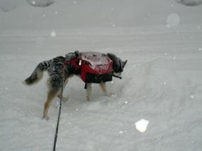 Husky Wanderung in Gunzesried, Raum Sonthofen in Bayern