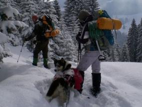 Husky Wanderung in Weicht, Raum Jengen in Bayern