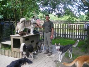 Huskywanderung in Schmallenberg, Raum Sauerland in NRW