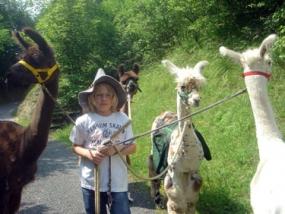 Lamatrekking in Heistenbach, Raum Limburg an der Lahn - Erlebnis Geschenke