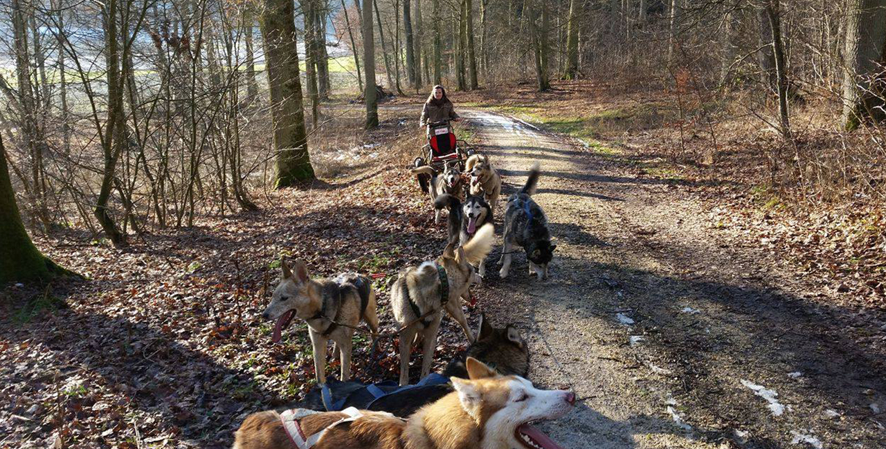 Schlittenhunde-Kurs