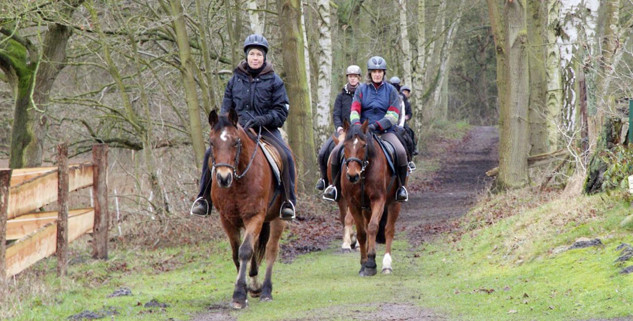 Pferde Kurs für Zwei Moisburg
