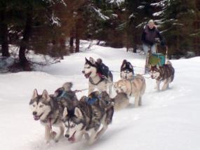 Schlittenhunde-Fahrt in Benneckenstein im Harz, Sachsen-Anhalt