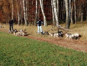 Schlittenhunde Halbtageskurs in Prötzel, Raum Berlin - Erlebnis Geschenke
