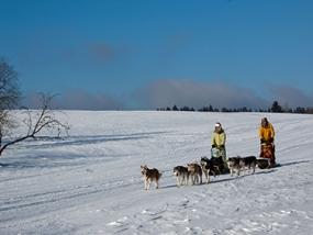 Schlittenhunde Kurs Hildburghausen - Erlebnis Geschenke