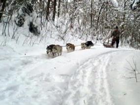 Schlittenhunde Kurs in Eppenschlag, Raum Passau in Bayern - Erlebnis Geschenke