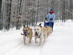 Schlittenhunde-Tagesfahrt in Neuhof-Hauswurz, Raum Fulda