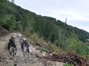 Schlittenhunde Tageskurs Jagstzell - Erlebnis Geschenke