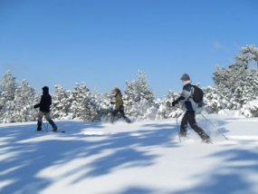 Schneeschuh Wanderung in Dobel, Raum Baden-Baden