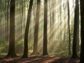 Überleben in der Wildnis in Treherz im Allgäu - Erlebnis Geschenke